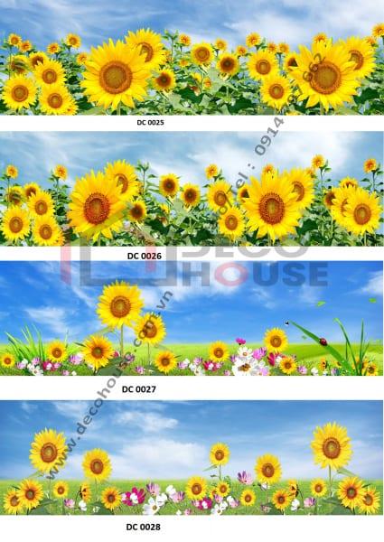 Kính ốp bếp 3d hoa hướng dương